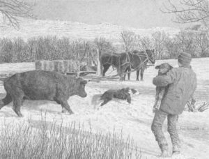 cow-chasing-11-5x15-dog